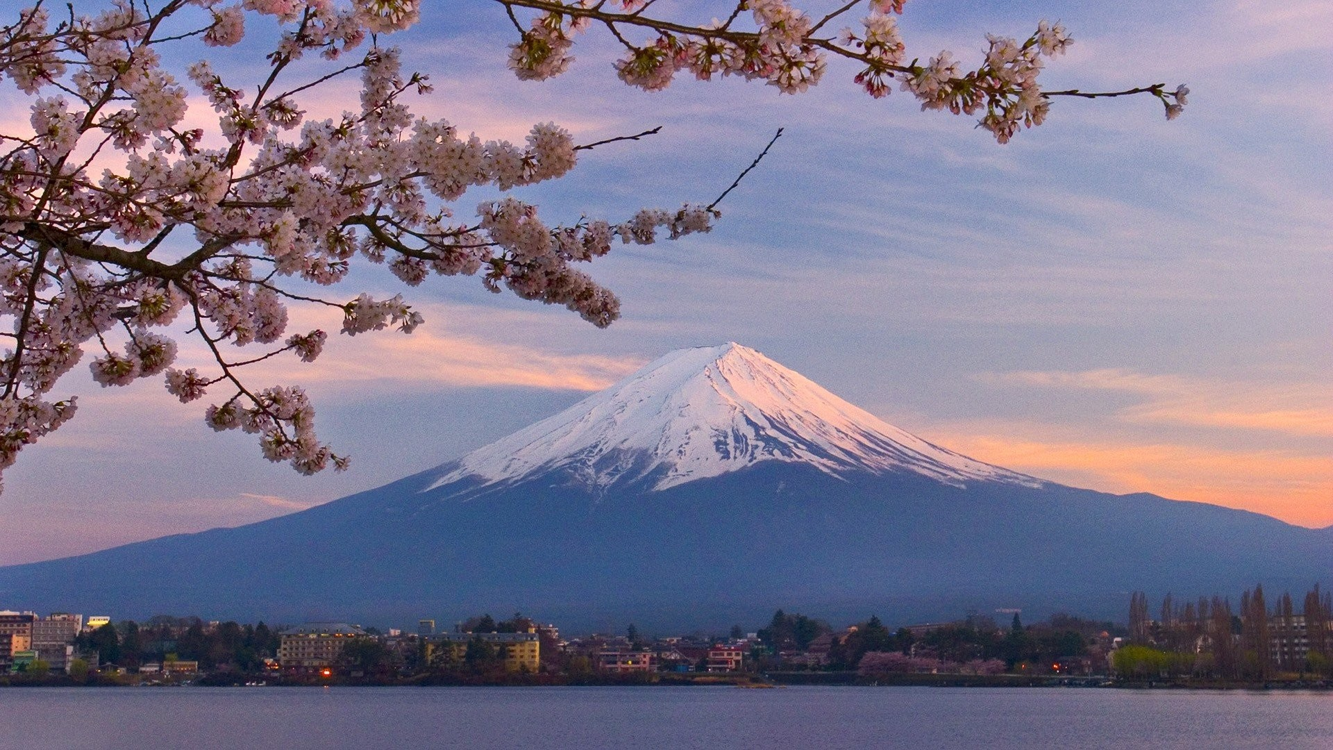 Japan Cherry Mount Fuji Blossoms Desktop Background Nature Pictures
